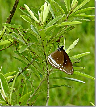 Butterfly - Perched on a tree